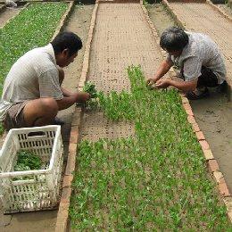 种苗繁育沙土扦插