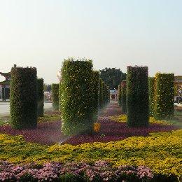艺菊菊花造型菊柱