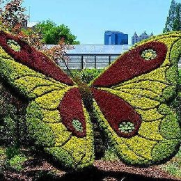 五色草造型立体造型蝴蝶