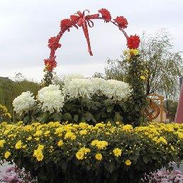 艺菊菊花造型花篮