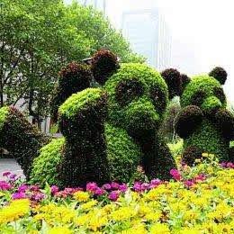 五色草造型熊猫