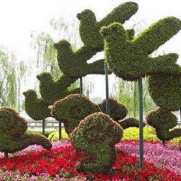 五色草造型和平鸽