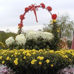 菊花造型花篮菊